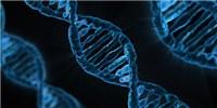 image: Exploring the Epigenome