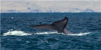 image: Marine Life Trending Larger