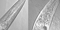 image: Long Live Collagen