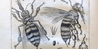 image: <em>Apiarium</em>, 1625