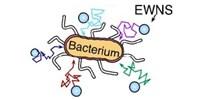 image: Nanobombs Terminate Foodborne Microbes