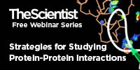 image: Strategies for Studying Protein-Protein Interactions