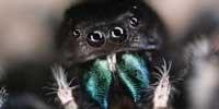 image: Through a Spider's Eyes