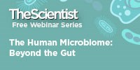 image: The Human Microbiome: Beyond the Gut