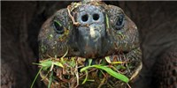 image: Image of the Day: Galápagos Gobbler