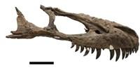 image: Dino Cannibalism?
