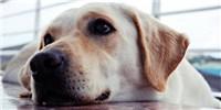 image: Puppy Love
