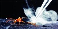 image: Beetle Bomb