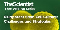image: Pluripotent Stem Cell Culture: Challenges and Strategies