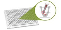 image: Enhanced Ultra-low Attachment Plate for Scaffold-free 3D Cell Culture