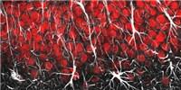 image: Image of the Day: Amazing Astrocytes