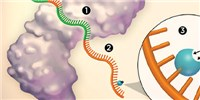 image: RNA Stucturomics