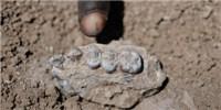 image: A New Human Ancestor?