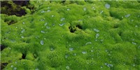 image: Image of the Day: Super-soaked Moss