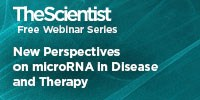image: New Perspectives on microRNA in Disease and Therapy