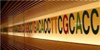 image: Extra DNA Base Discovered