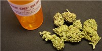 image: Obama Administration Eases Marijuana Research Requirements