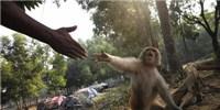 image: Monkey Business