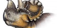 image: <em>Triceratops</em> Kin Found