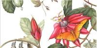image: Botanical Art