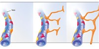 image: Rethinking Lymphatic Development