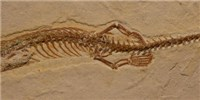 image: Four-legged Snake Fossil Found