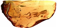 image: Image of the Day: Archived in Amber