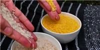 image: Judge Decides on GM Rice Retraction