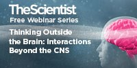 image: Thinking Outside the Brain: Interactions Beyond the CNS