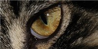 image: Pupil Alignment of Predators and Prey