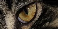 image: Pupil Alignment of Predators and Prey