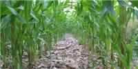 image: Scotland Nixing GM Crops