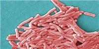 image: Legionnaires' Bacteria at GSK
