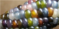 Image of the Day: Colorful Corn