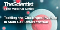 image: Tackling the Challenges Involved in Stem Cell Differentiation