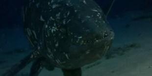 image: A Fishy Chorus
