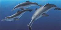 image: New Species Links River and Oceanic Dolphins