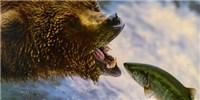 image: Bear Study Breaks Down