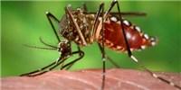 image: Dengue's Downfall?