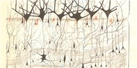 image: The First Neuron Drawings, 1870s