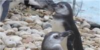 image: Ocean Sentinels