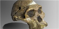 image: Early Hominin Hearing