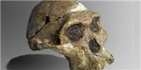image: Early Hominin Hearing