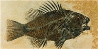 image: Image of the Day: Fossil Fish
