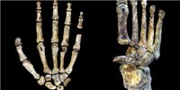 image: <em>Homo naledi</em>'s Hands and Feet