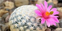 image: One-Third of Cactus Species Threatened