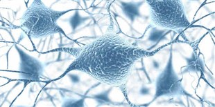 LabQuiz: Name That Neuron!