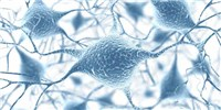 image: LabQuiz: Name That Neuron!