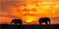 image: Explaining Elephants' Cancer Resistance