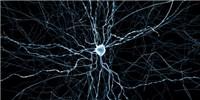 image: Digital Rat Brain